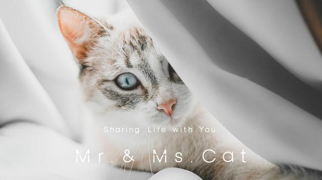 愛猫家のためのライフスタイルD2Cブランド「 Mr. & Ms. Cat 」:時事ドットコム