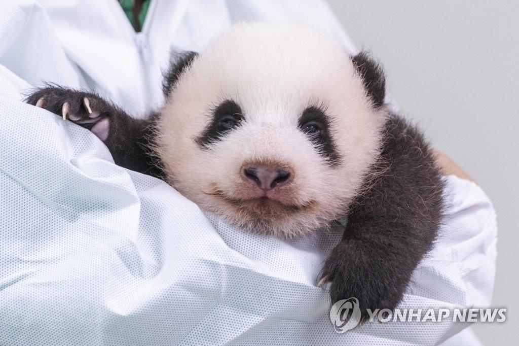 パンダの名づけ親募集   聯合ニュース