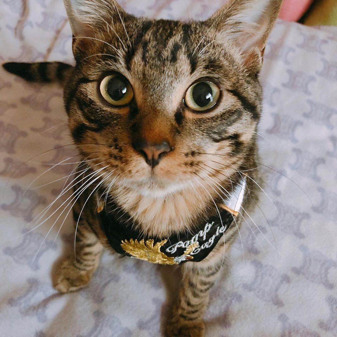 愛猫を亡くして3カ月、着ぐるみを着て生まれ変わってきたような猫と出会った|まいどなニュース