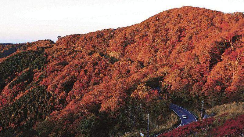 夕日を浴びて全山染まる 護摩壇山で紅葉進む:紀伊民報AGARA