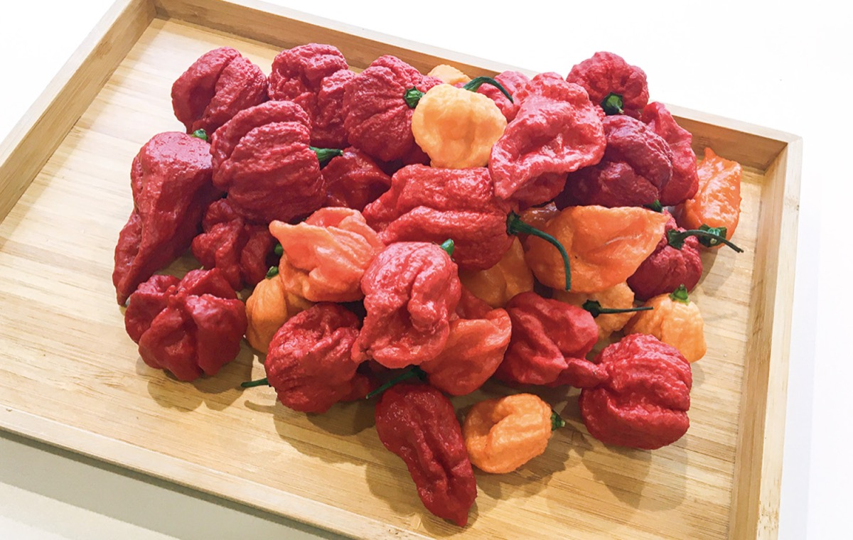 【Web限定記事】 川崎生まれ・新種の唐辛子「香辛子」って?あなたのアイデアレシピを大募集 #香辛子レシピコンテストで投稿 | 中原区 | タウンニュース