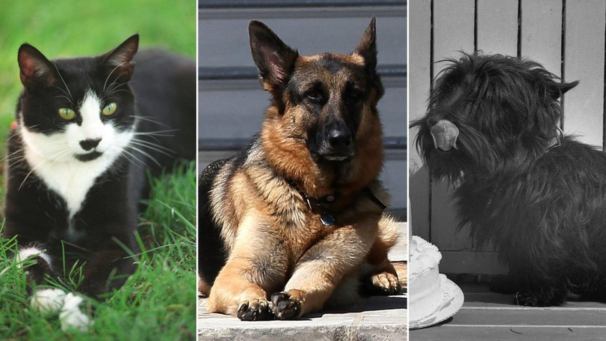 バイデン氏、2匹の犬とホワイトハウスへ 歴代「ファーストペット」たち(BBC News) - Yahoo!ニュース