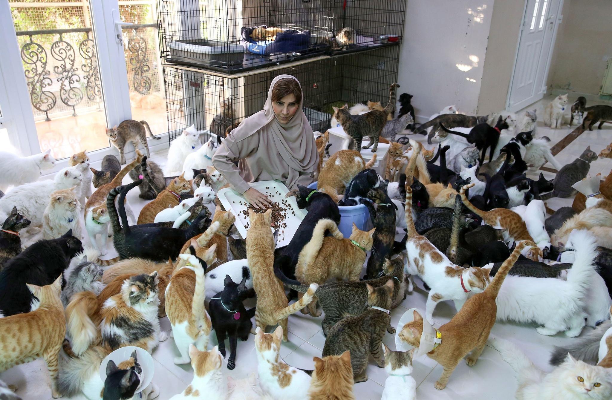 オマーンの首都は「マスキャット」? 480匹の猫屋敷、餌代月80万円(AFP=時事) - Yahoo!ニュース