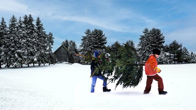 今年もイケアに本物のモミの木がやってくる! ジンジャーブレッドハウスコンテストも開催 :時事ドットコム