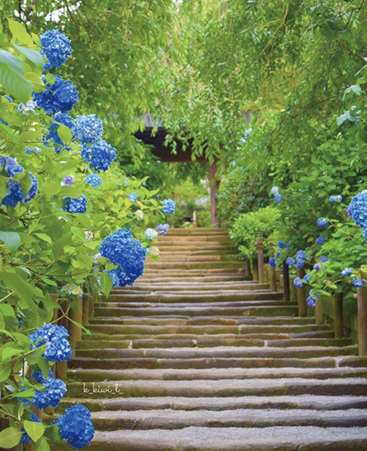 鎌倉の魅力、写真で応募 農泊協議会がコンテスト | 鎌倉 | タウンニュース