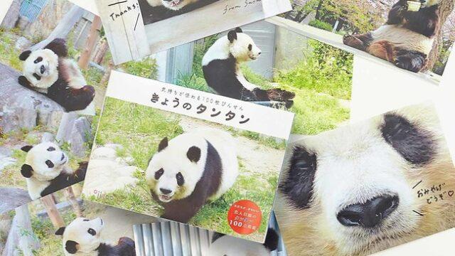 飼育員さんの愛から生まれた 神戸市立王子動物園のパンダ・タンタンの100枚びんせんがフェリシモ「YOU+MORE!」から誕生!:時事ドットコム