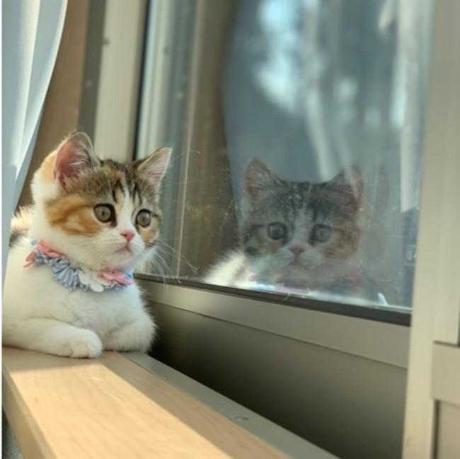"""~2月22日(月)は「猫の日」~ 2代目""""にゃんバサダー""""発表!今年は初のオンライン写真展も! 「第2回 だいにゃる猫の写真展」:時事ドットコム"""