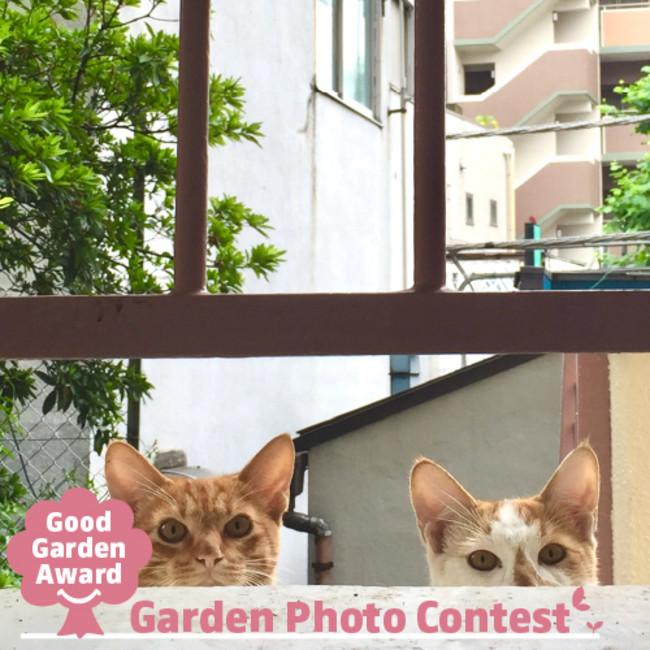 【キャンペーン】お庭の写真コンテストGood Garden Award ~GARDEN PHOTO CONTEST~:時事ドットコム
